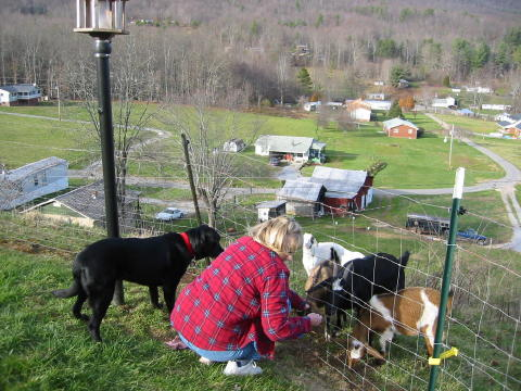 Barbara, Blackie and the Goats